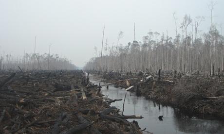 Uma floresta da Indonésia que foi devastada pela exploração madeireira. 30% do rayon e viscose usados em roupas são provenientes de florestas antigas e ameaçadas. Fotografia: Rainforest Alliance Network