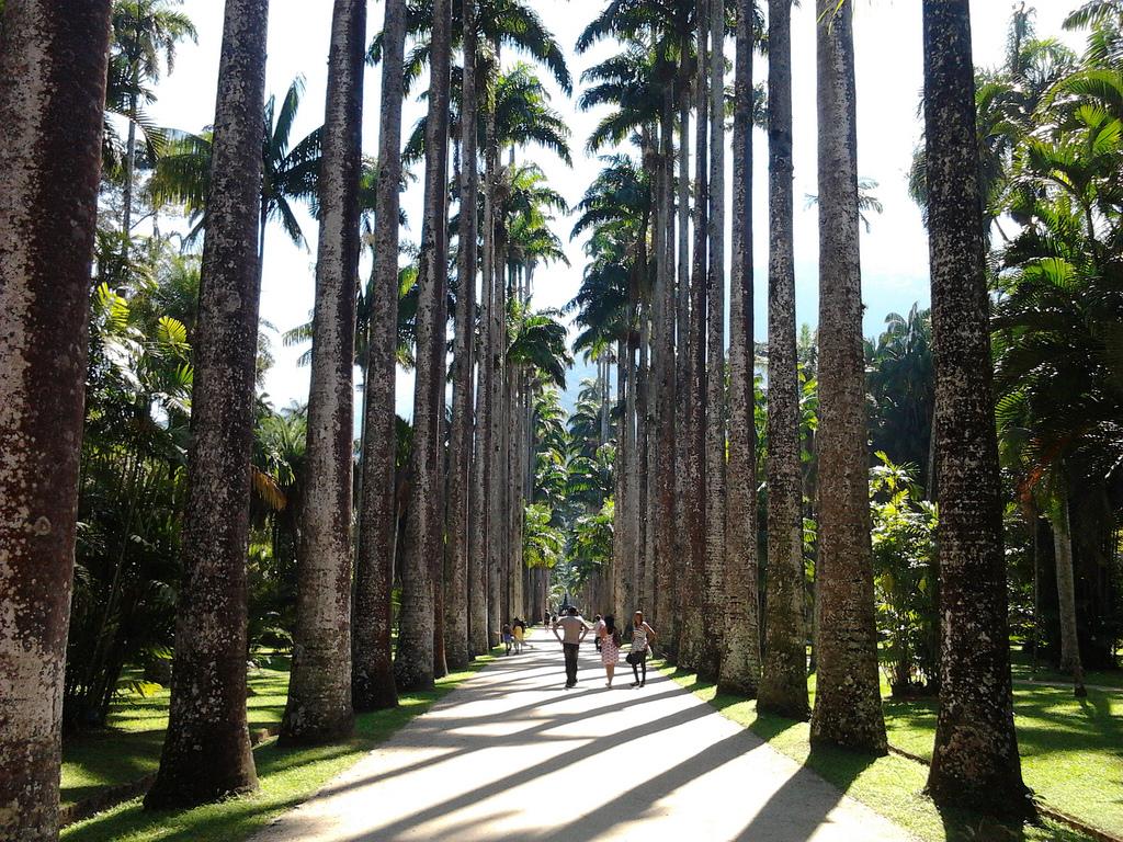 Aleia_Barbosa_Rodrigues,_no_Jardim_Botânico_do_Rio_de_Janeiro_-_Brasil